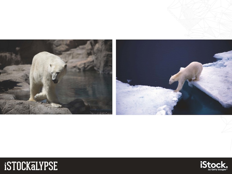 例)シロクマ:動物園内よりも、自然のなかにいるようす(右)に人気がある