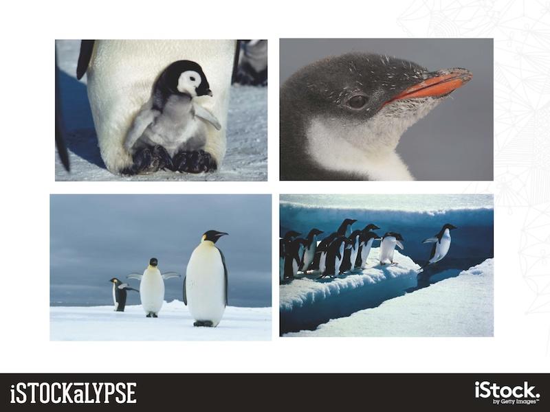 例)ペンギン:擬人化できて、人間社会について連想できるものに特に人気がある