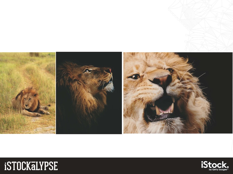 例)ライオン:人気があるのは中央のドラマチックなもの