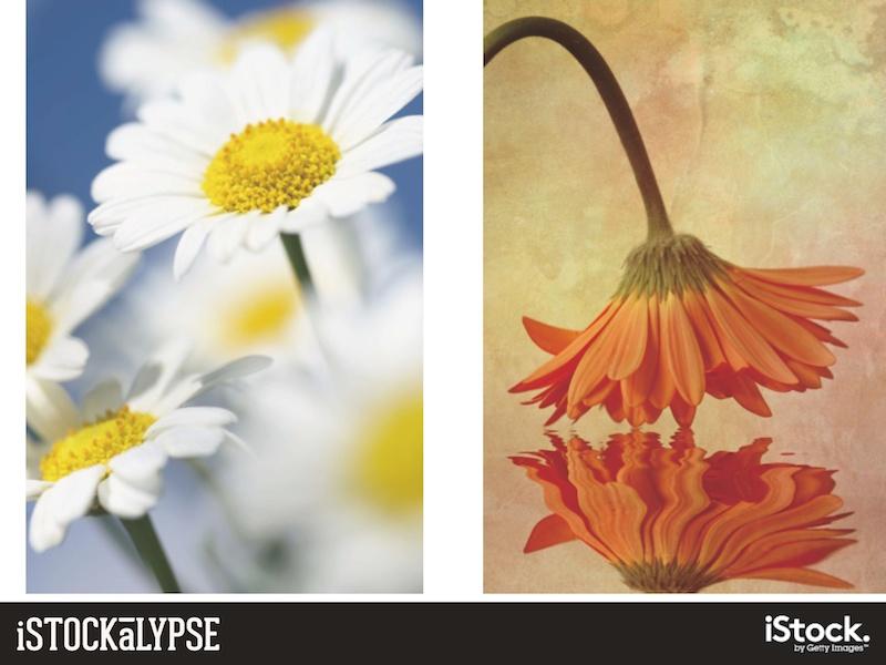 例)花:ピュアな雰囲気を連想させるもの