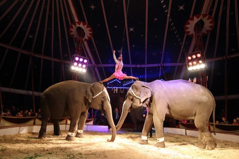 昔ながらのサーカス一座。さまざまな動物のショーを見た。とても懐かしい気分になる。こんな瞬間も逃さなずに撮影することができた。