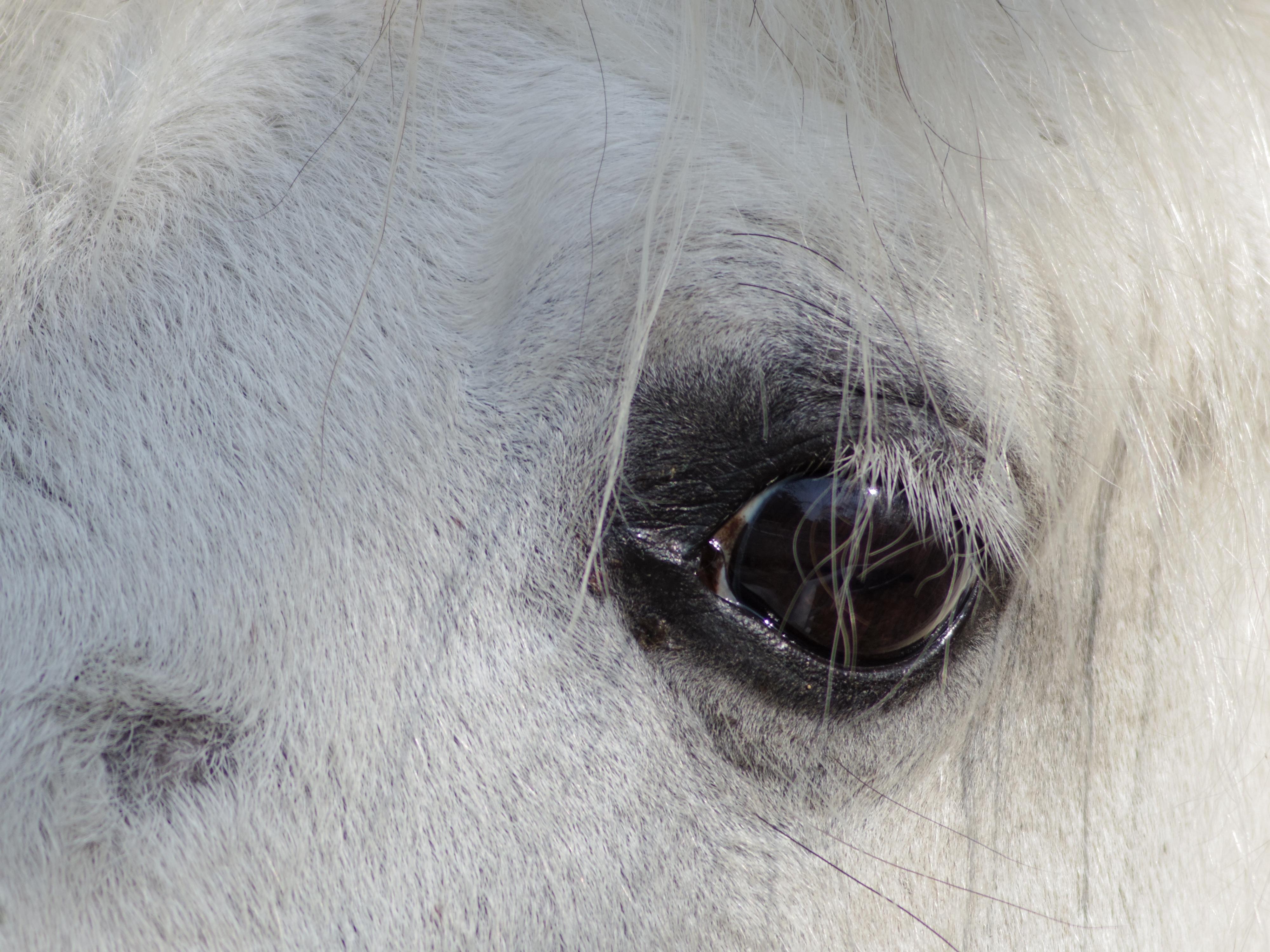 望遠側で馬の目のマツゲにピントを合わせました。DA★ 60-250mm F4ED [IF] SDM / 1/500秒 / F4 / 0EV / ISO100 / 絞り優先AE / WB:オート / 250mm
