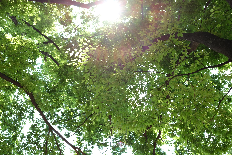太陽が画面内に入る逆光で撮影。X-T1 / 1/90秒 / F5.6 / +1EV / ISO200 / 絞り優先AE / WB:オート / 23mm