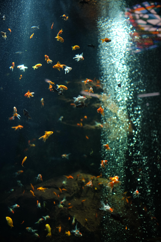 水族館のような暗所でも、開放F1.4ならベースISO感度のままで撮影できた。X-T1 / 1/640秒 / F1.4 / -2EV / ISO200 / 絞り優先AE / WB:オート / 23mm
