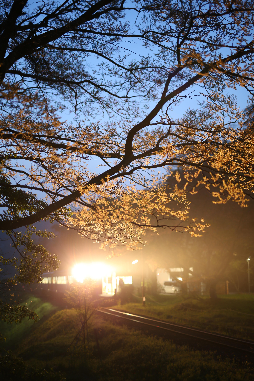 夕闇迫るなか、里山を走るローカル鉄道の列車が無人の駅に到着した瞬間、強烈なヘッドライトの光が木の枝を透かすように照らす。直射光によるフレアを最小限に抑えたレンズならではの描写。大口径レンズでありながら耐逆光性能が高いので安心して逆光撮影ができる。EOS 5D Mark III / 0.6秒 / F1.4 / 0EV / ISO200 / マニュアル / WB:太陽光 / 50mm