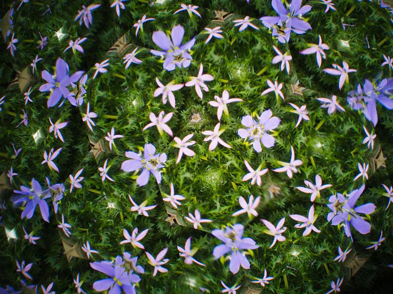 ちょっと引いて撮れるので、花びらだけでなく、花全体を撮影することが可能。オリンパス PEN E-P5、M.ZUIKO DIGITAL 17mm F1.8