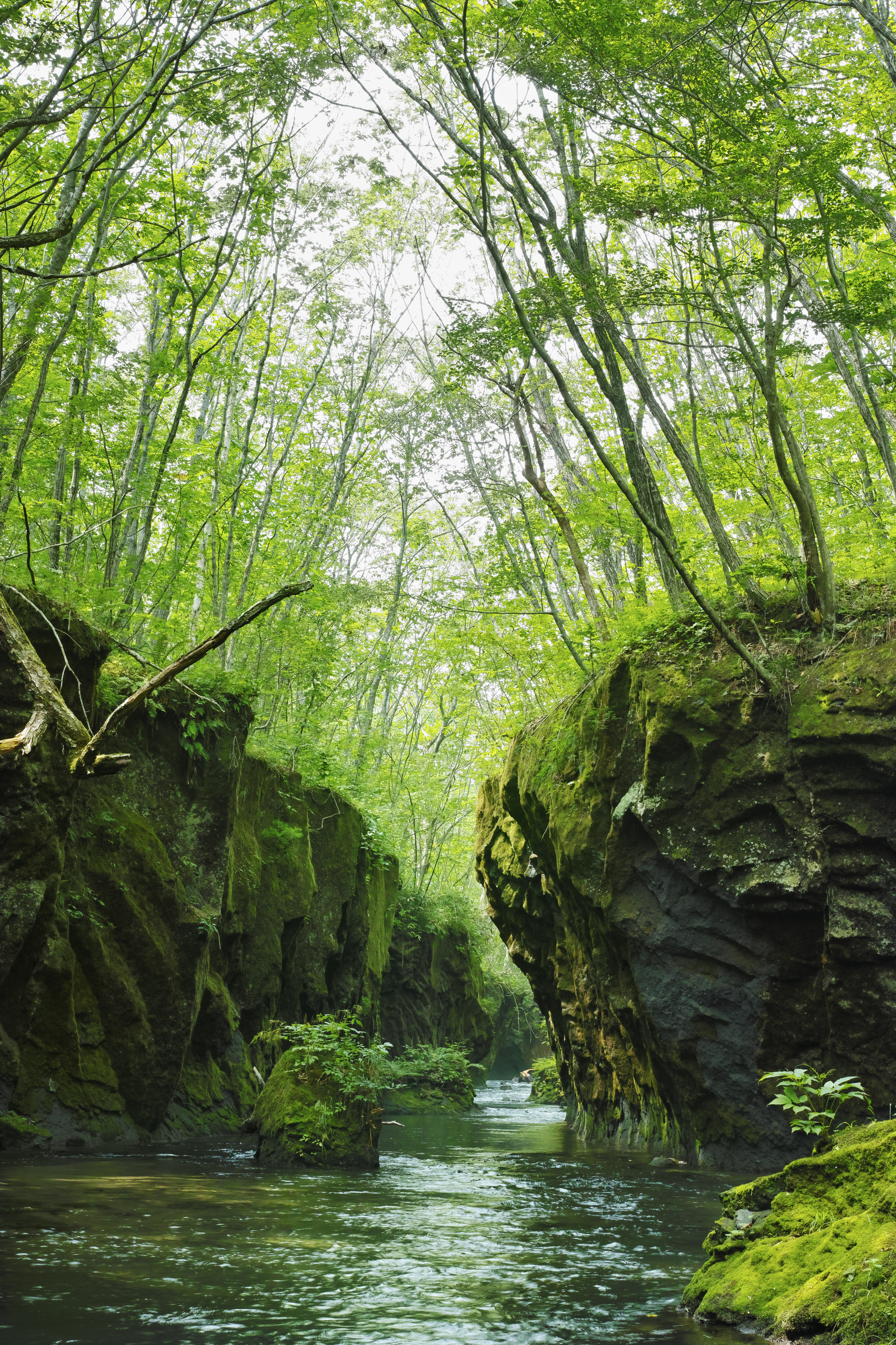 冷たい沢に腰まで浸かりながら渓谷を撮影。岩肌と空へと伸びる木々の広がりを人の視野角に近い構図で捉えた。ISO100 / F8 / 1/15秒