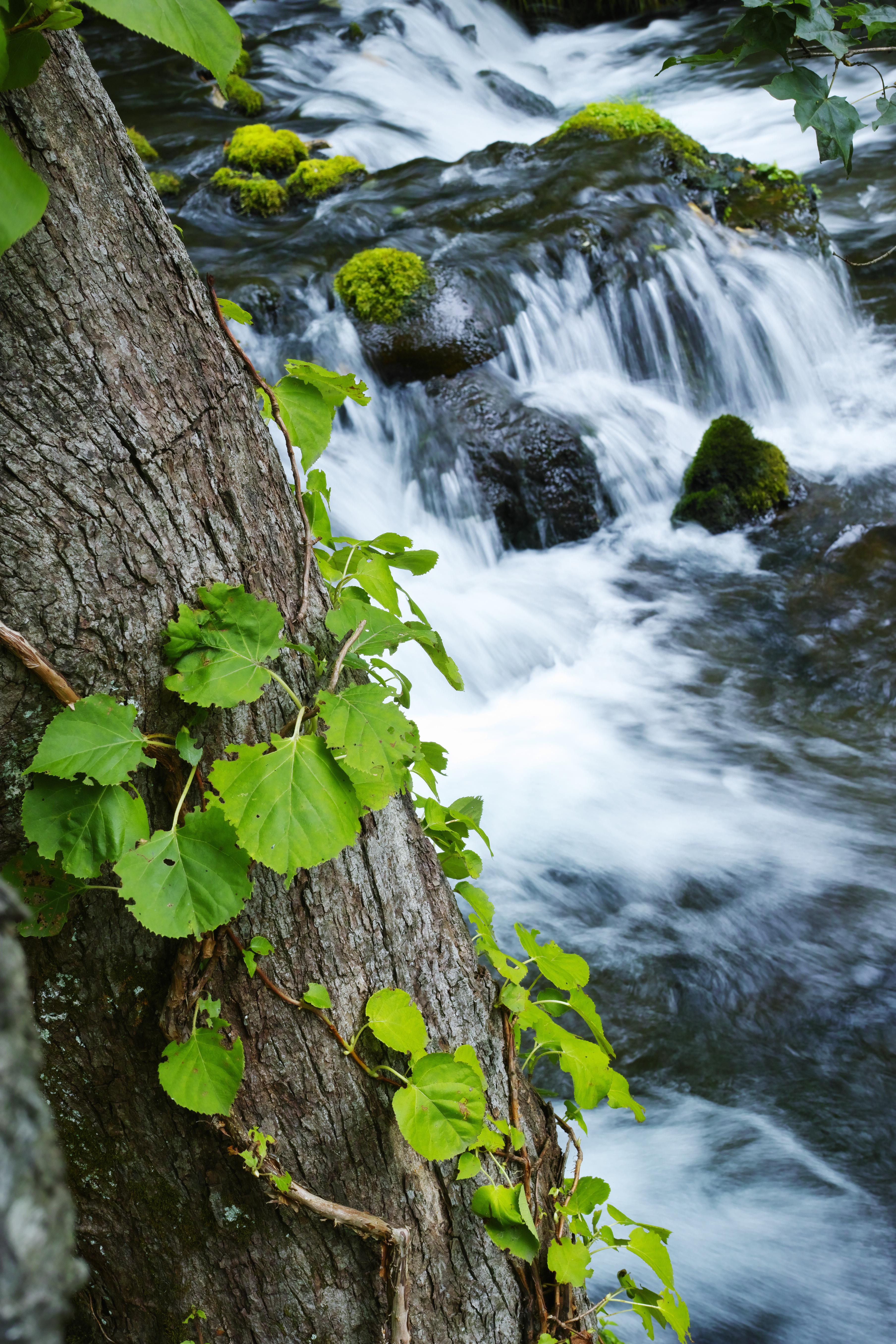 湧水地から湧き出る清水のしぶきを全身に浴びながら、森の木々の力強さにレンズを向ける。若い緑の葉と木の表皮の皺をリアルに描写。ISO100 / F11 / 1/8秒