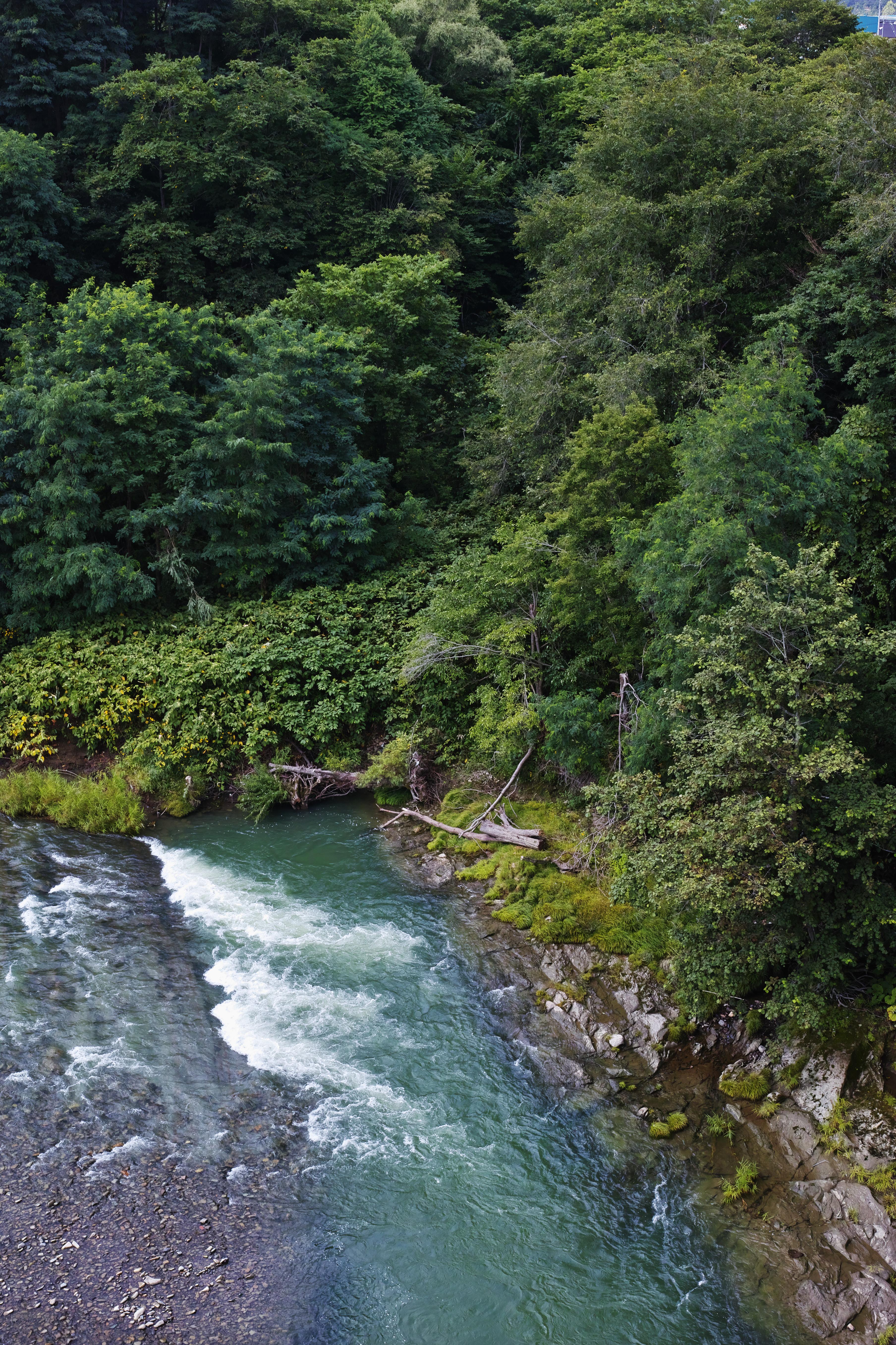 山間をとうとうと流れる渓流を見下ろす。前日まで降り続いた雨で増水した川が上流より巨木を押し流してきた。むせるような濃い緑の深さに自然の瑞々しさを求める。ISO100 / F5.6 / 1/100秒