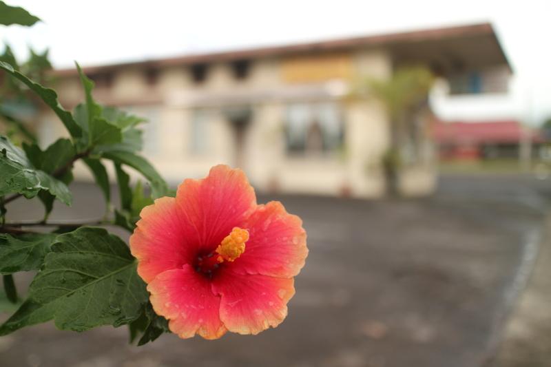 ハワイ島の小さな街で雨に濡れたハイビスカスを撮影。水滴がついた色っぽい花を、街の雰囲気が感じられる画角とアングルで背景をぼかして狙った。キヤノンEOS M3 / EF-M22mm F2 STM / 22mm(35mm相当)/ 絞り優先AE(F2、1/1,000秒、±0EV)/ ISO 125 / WB:太陽光 / ピクチャースタイル:オート