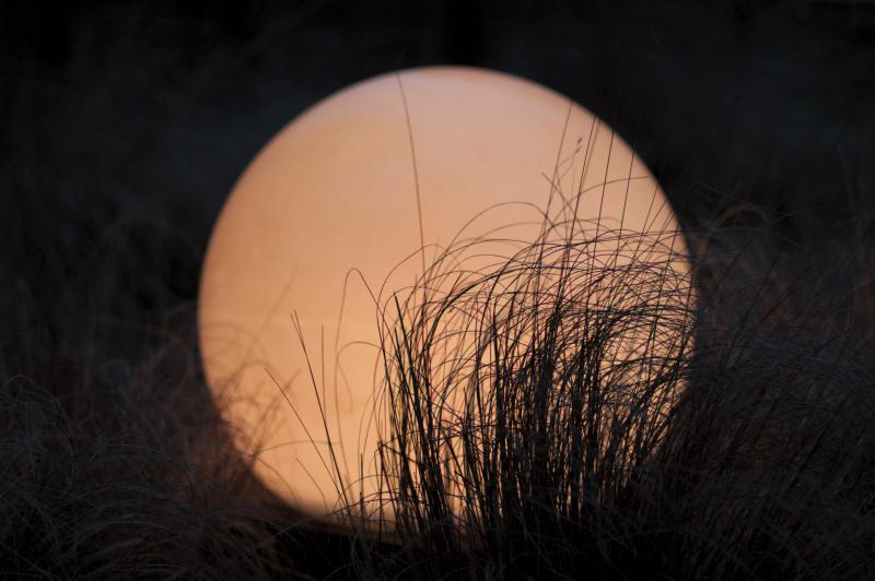 六本木ヒルズにあった丸い照明。手前の植え込みの草との組み合わせで「月とススキ」に見立てた。