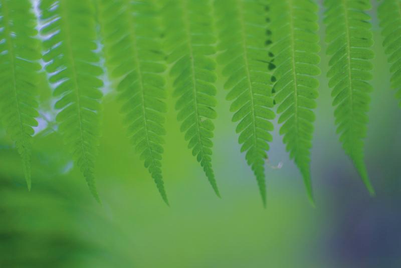 リズムを刻むオブジェクトの種類により、音色が変わる。最初の写真と同じようなリズムだが、自然物はやわらかい。