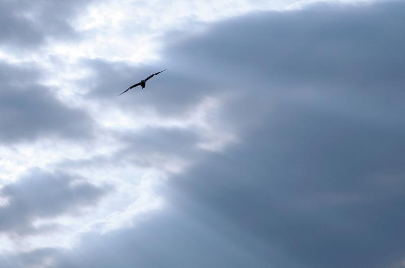チンダル現象が起きている静かな風景の中に、1羽のカモメが飛んできた。このカモメを、「トーン」という1拍として入れることで、余韻が感じられる写真になった。スペースが広いだけに、1拍の効果が大きい。
