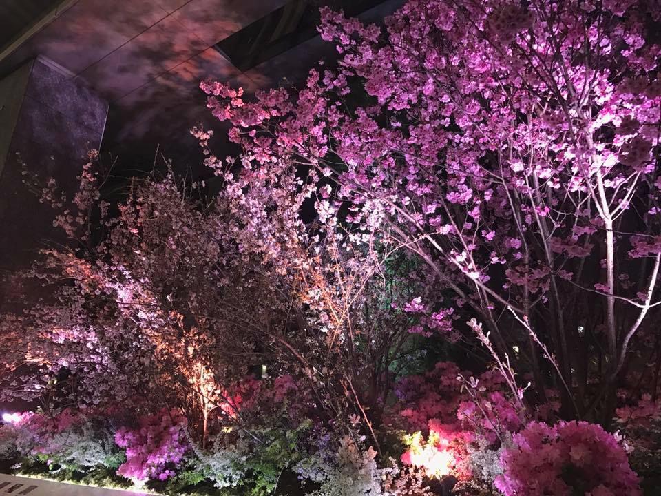 都内某所にて夜桜を撮影。お花見の席で「1-2-Switch」というのはなかなか良さそうですけど、本体を壊さないようにご注意下さい!