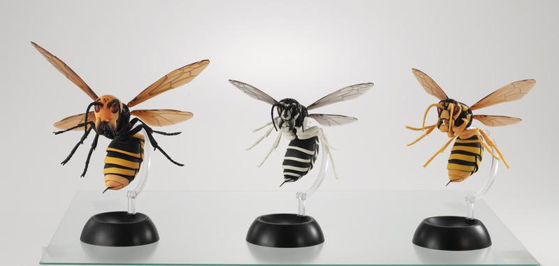 初期ラインナップは3種類。「オオスズメバチ」、「クロスズメバチ」、「キイロスズメバチ」