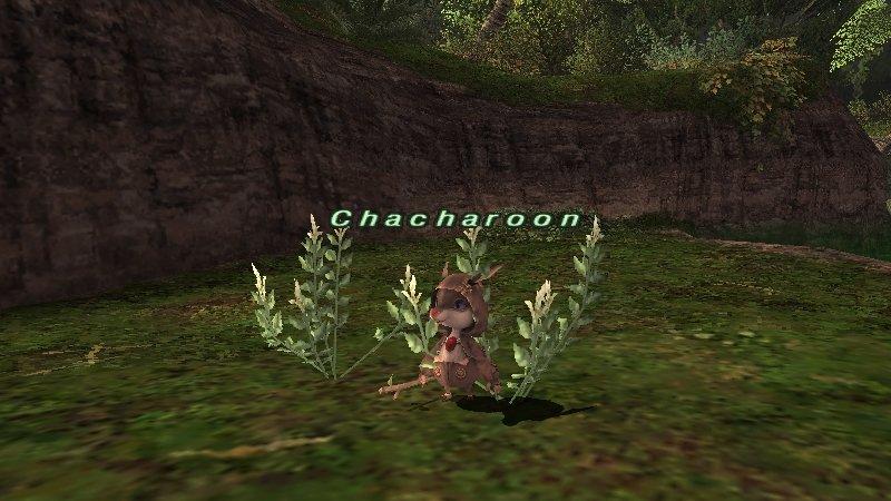 モンスターと言うにはあまりにも可愛らしいペットのようなちびモンスター達。Chacharoonに話しかけて育てるモンスターを選択する。最初は羊からはじまり、徐々にバリエーションを増やしていくという