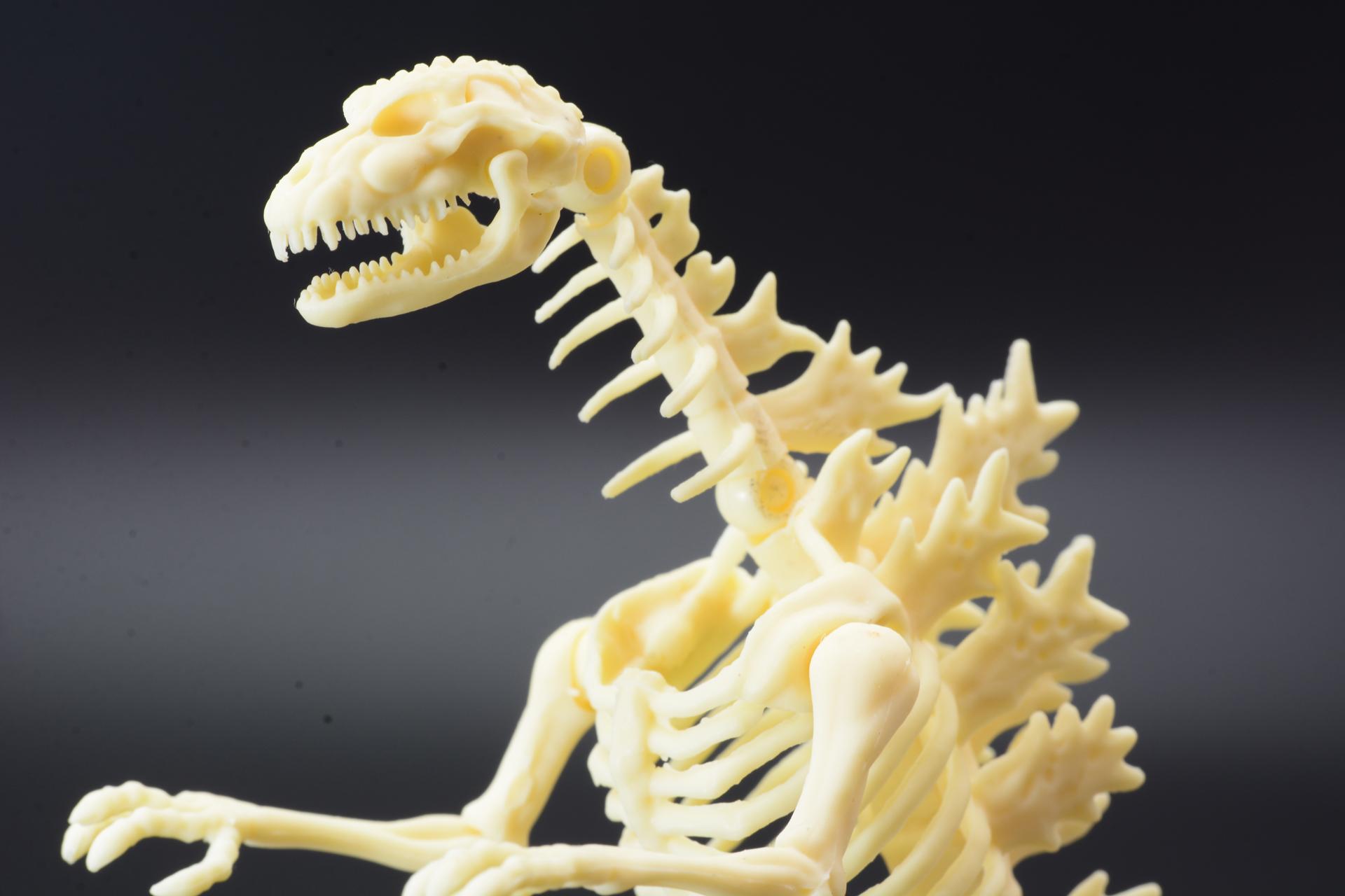各部の骨格ならではのモールドや、ゴジラらしさをチェック