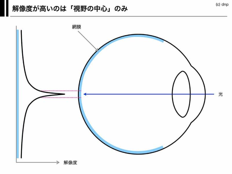 人間の眼球の構造。解像度が高いのは、視野の中心のごく一部だけで、周辺視野の解像能力は高くない