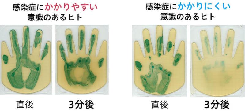 寒天培地によるハンドスタンプ法による、大腸菌塗布直後と3分後の評価(大腸菌を緑色に発色させている)。