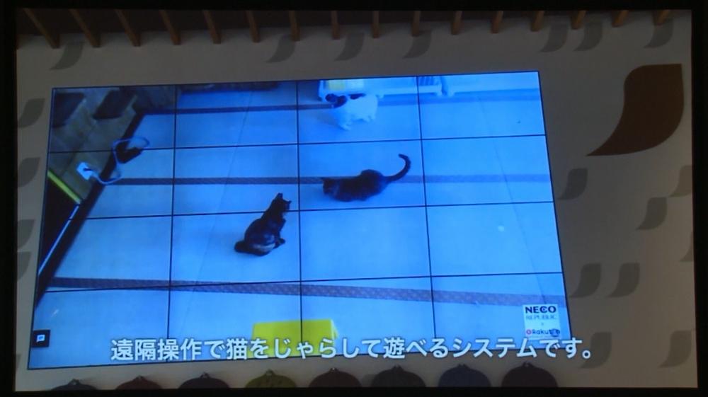 遠隔操作でポインタを操って猫と遊べる