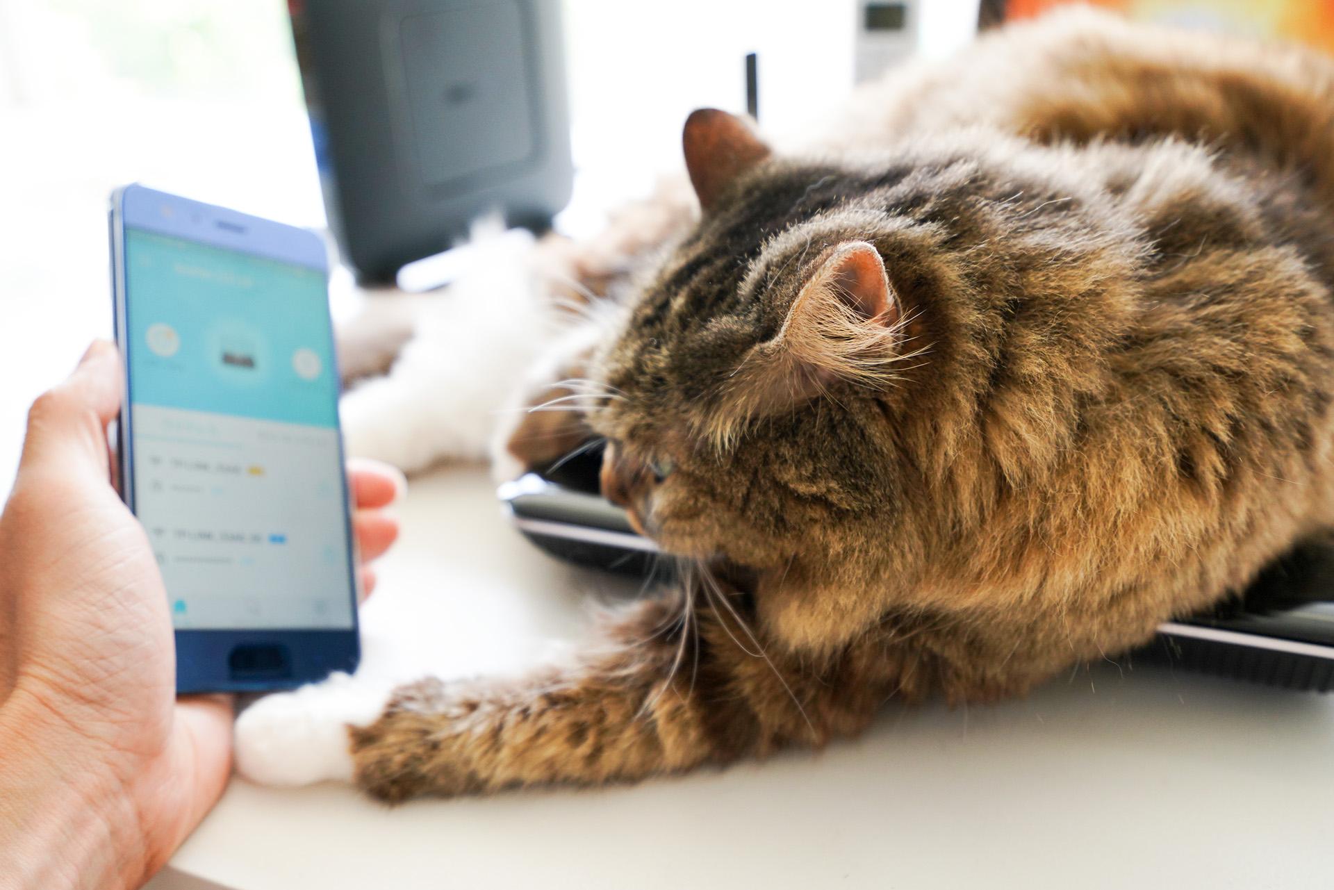 自宅Wi-Fiが二重ルーターになっているかの確認は、経路が表示できればカンタンだ。とはいっても、猫でもチェックできるワケではないが