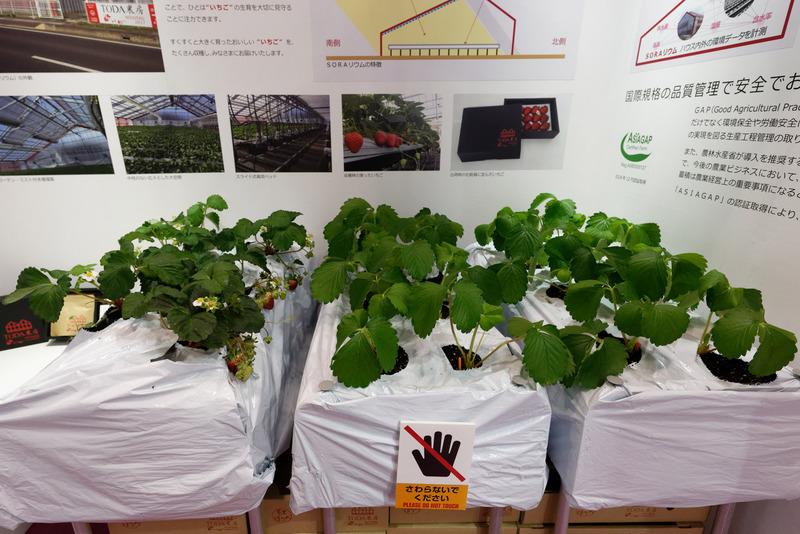 右2列は実際に茨城県の施設で栽培しているイチゴだという