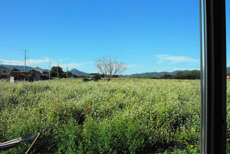 起床時に寝室のカーテンを開けると、そば畑が広がっており、自然の中にいるという実感がある