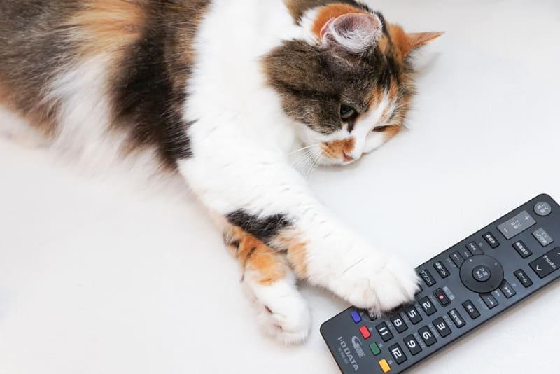 "<a href=""https://internet.watch.impress.co.jp/docs/column/homewifi/1282791.html"" class=""strong bn"" target=""_blank"">前回</a>から、「Fire TV Stick」でアイ・オー・データ機器の「REC-ON」に録画した番組を再生するための設定を進めている"