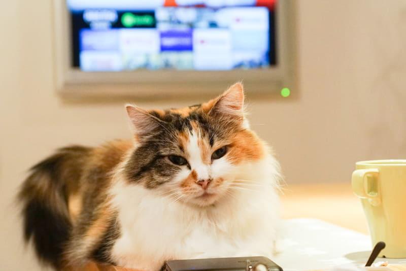 """<a href=""""https://internet.watch.impress.co.jp/docs/column/homewifi/1285217.html"""" class=""""strong bn"""" target=""""_blank"""">前回</a>に続き、REC-ONの録画番組の画質を「DiXiM Play Fire TV版」で変えて再生してみよう"""