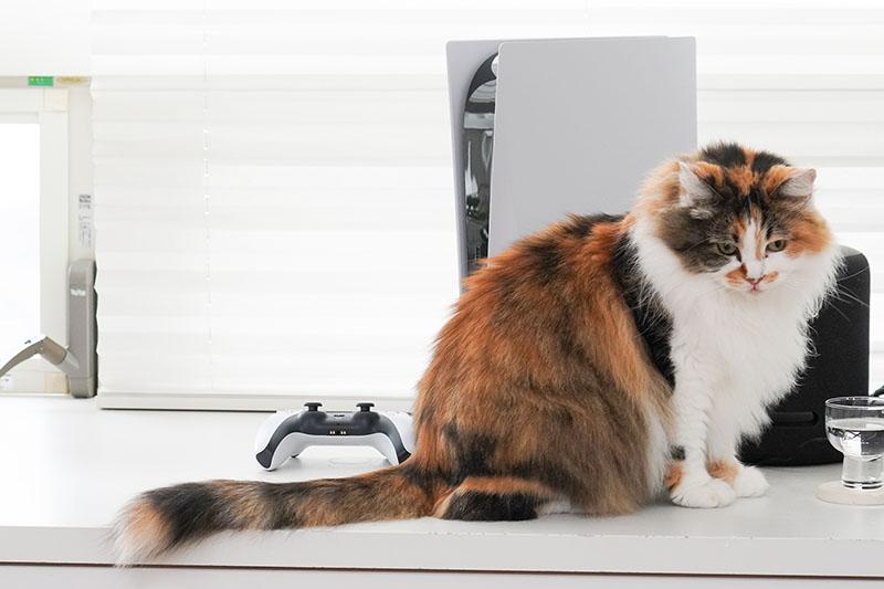 自宅Wi-Fi内ならどこにいてもスマホからPS5を「リモートプレイ」できるように設定してみよう