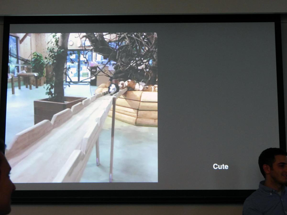 日本の長崎バイオパークで撮影されたVine動画。米国でも人気があり、このアカウントをフォローしている米国人も多いという