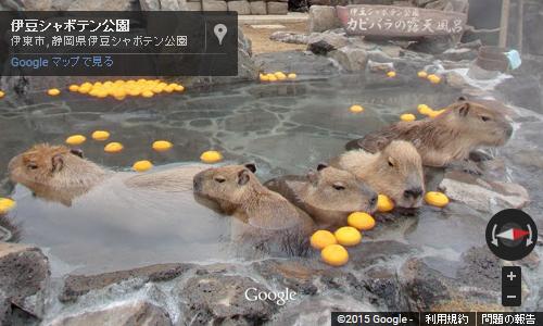 静岡・伊豆シャボテン公園の「カピバラの露天風呂」