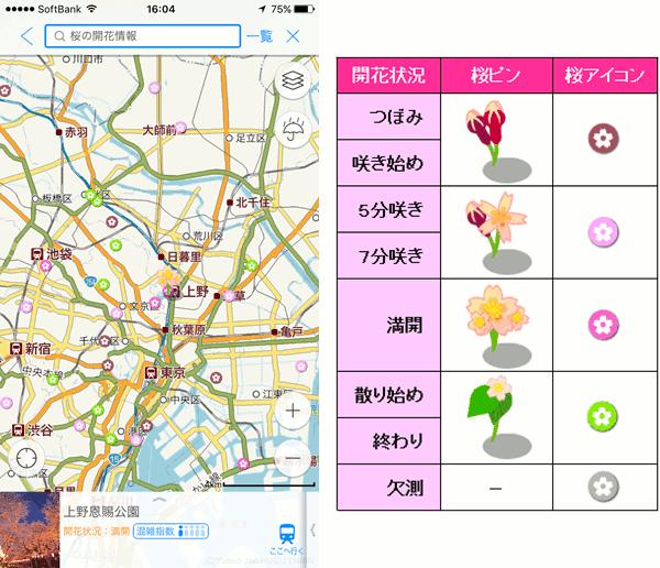 桜の開花情報は、4段階のイラストで表現された桜アイコンで確認できる