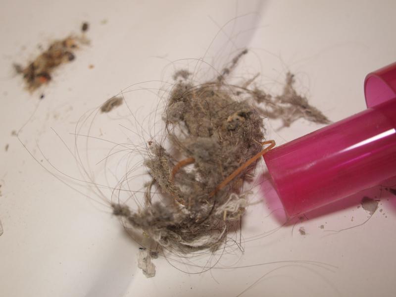 バサッとゴミを出したところ。ホコリはもちろんだが、これまで使った他モデルと比較して、髪の毛が多く取れている印象だった