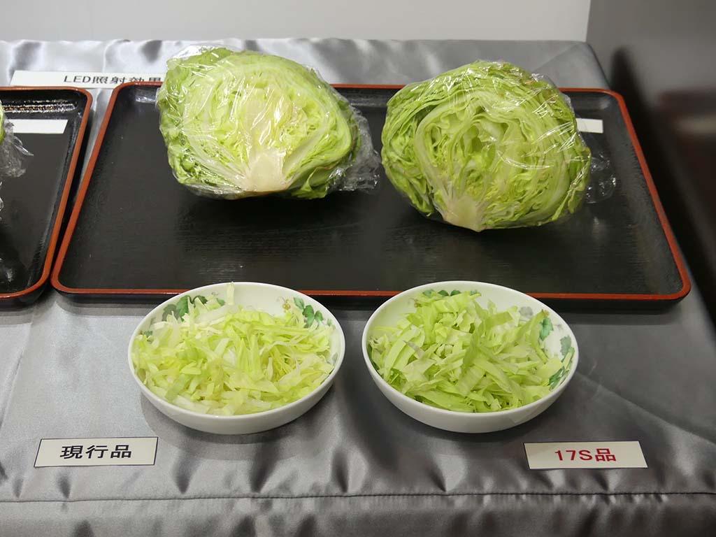 右のキャベツがLEDを5日間照射されたもの。葉物野菜の緑化を促進することで、色が鮮やかになっているのが分かる