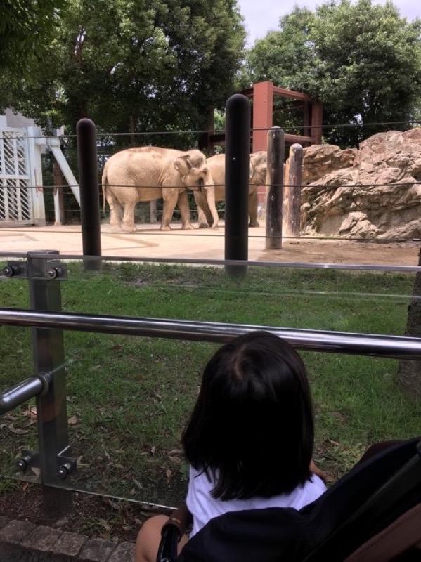 次は象。平和そのものといった雰囲気。「象さん(笑)なんで(笑)鼻で食べてるの(笑)」と爆笑してた。楽しそうだ