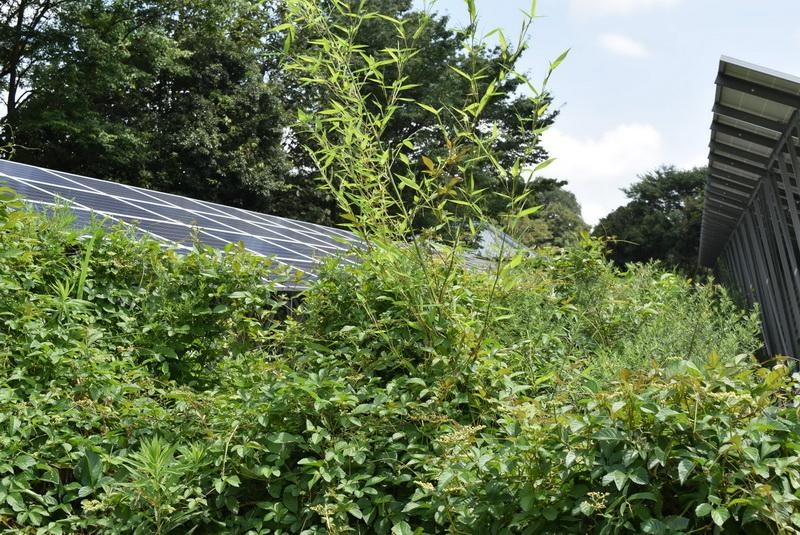 うっそうと生い茂る植物に覆い隠されつつある発電所