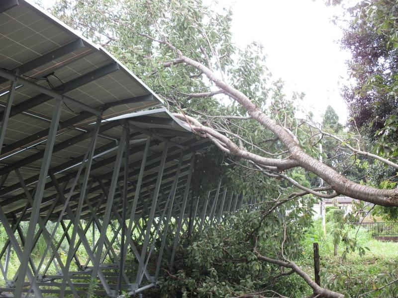 台風による倒木なので保険適用対象とのことだ