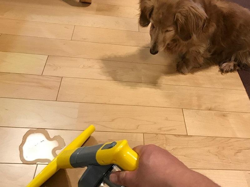 ペットの粗相には、洗剤や脱臭剤を含ませた水をスプレーしてから吸い取る