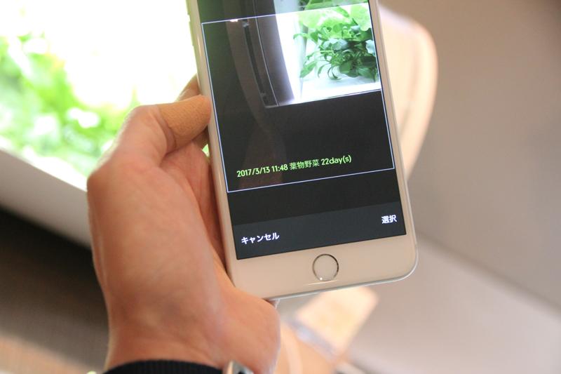 アプリ内のカメラから撮影すると、栽培日数と撮影日が記録される。野菜がうまく育たないときにサポートセンターにアドバイスが求めやすくなる