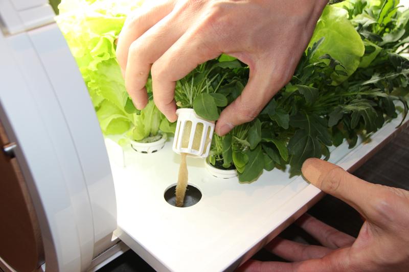 1株ずつセットでき、異なる野菜を同時に育てられる
