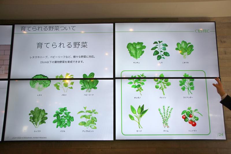 15cm以下の葉物野菜を育てられる