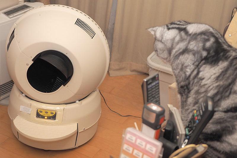 「とろ」は「キャットロボット」のサイクル動作を興味深げに見ます