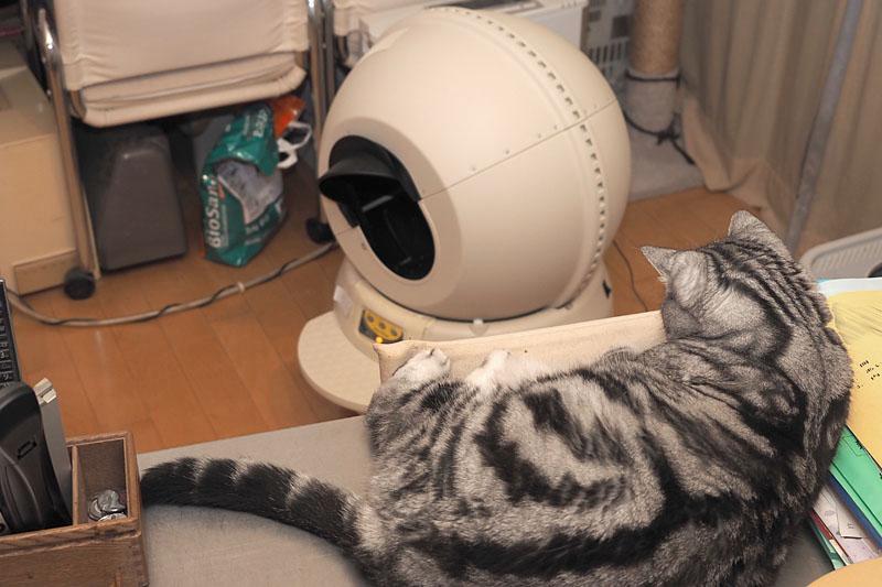 「キャットロボット」のサイクル動作の音は、猫を驚かせない程度静かです