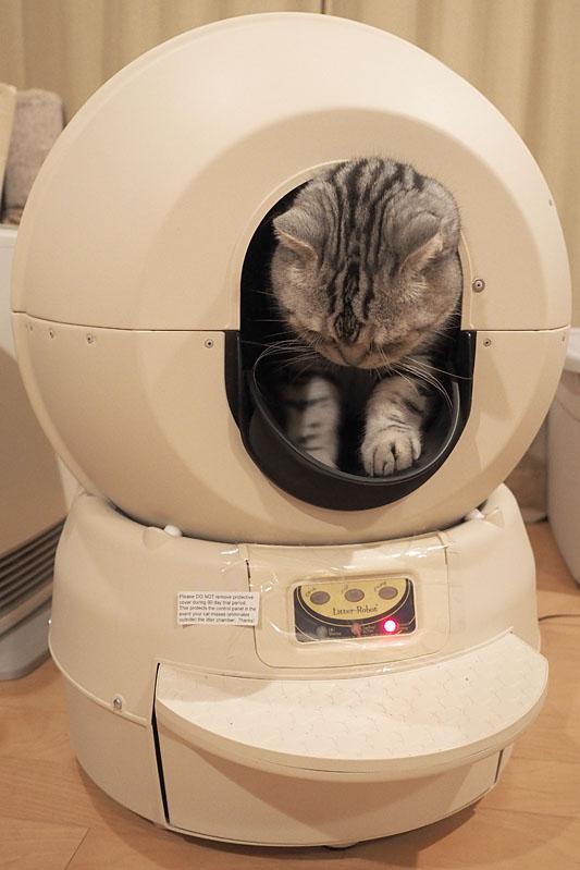 ちなみに、1台で最大3匹までの猫が使用できるそうです。1匹あたりの体重は2.2kg以上。2.2kg未満の体重だとセンサーが正常に反応しないとのこと。「とろ」は約7kgなので問題ありません