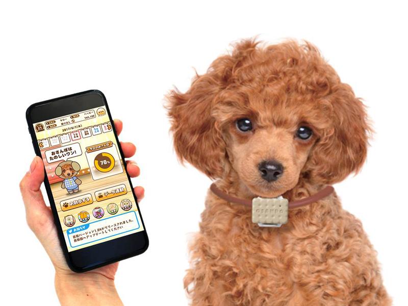 犬専用のウェアラブルデバイス「いぬのきもち お散歩Time」と専用アプリ