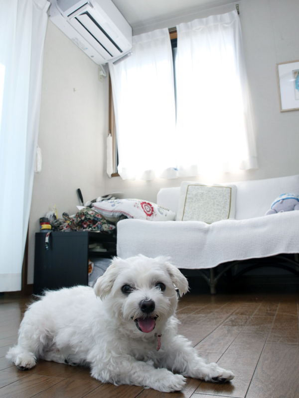 家族はもちろん、愛犬の定吉くんも快適に過ごせる空間に!