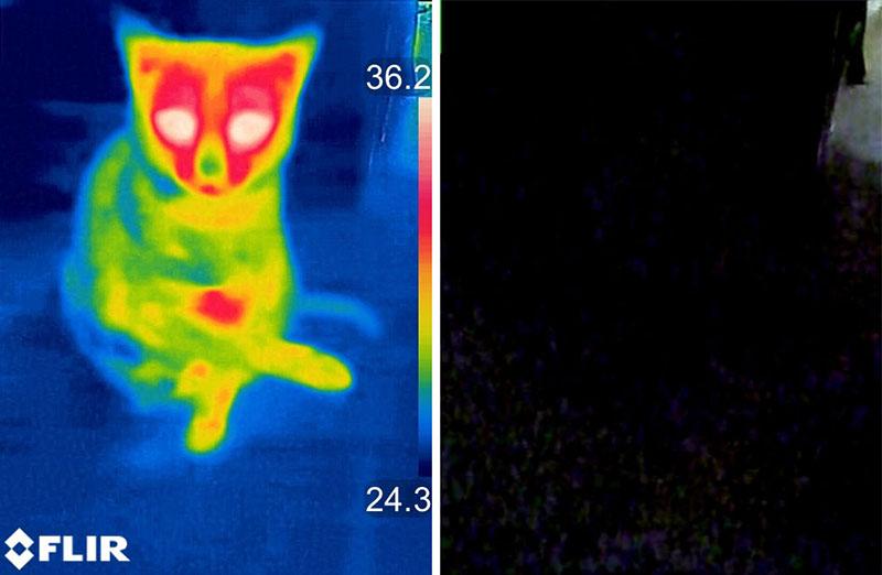 毛づくろい中の猫を見てみました。じつはこれ、ほぼ暗闇の中です。暗闇でも、サーモグラフィーなら温度分布によって猫などの存在がハッキリ見えるというわけです