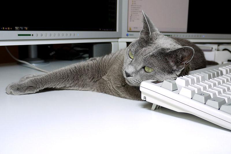 何もしないとこの状態を維持したりしますが、キーボードを使うとカタカタと音がし、それに反応して猫がこちらを向いて頭でキーを押しちゃったりします