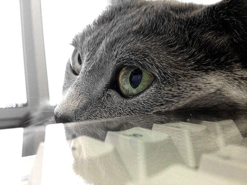 猫って、キーボードに限らず、ナニカを枕にして寝たりしますよね